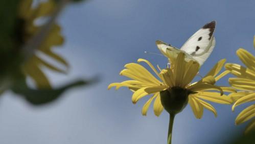 Bild zum Thema Familienrecht - Schmetterling auf Blume